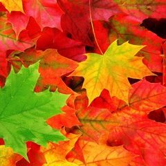 Sm square autumn leaves wallpaper11 600x450