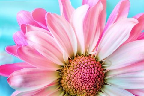 Md flower 3140492 1920